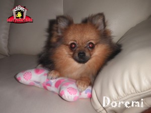 Doremi - Derby Winner House - Jasa Penitipan Anjing