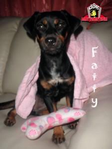 Fatty - Derby Winner House - Jasa Penitipan Anjing
