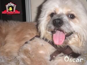 Oscar - Derby Winner House - Jasa Penitipan Anjing