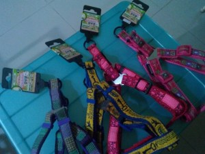Cosmo Harness L 20mm