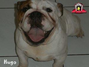 Hugo - Derby Winner House - Jasa Penitipan Anjing